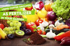 compost-coffee-grounds
